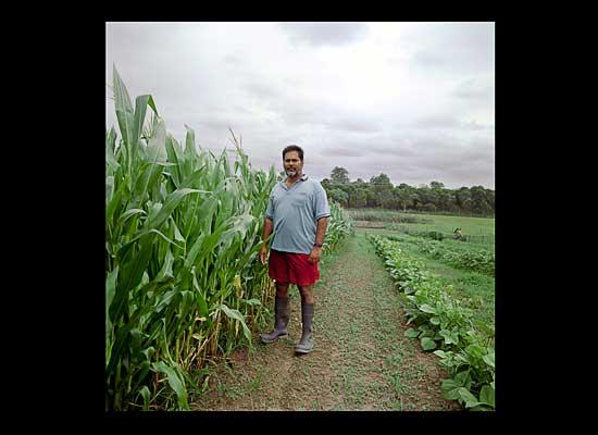 FijianIndian gardens replacing lost farmlands Narendra Singh 4